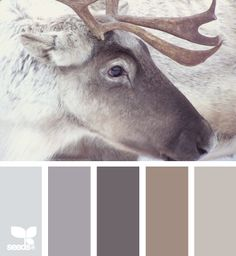 Gray Paint Palet and Beige